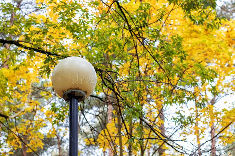 Round lantern on background of branches with yellow autumn leaves royalty free stock image