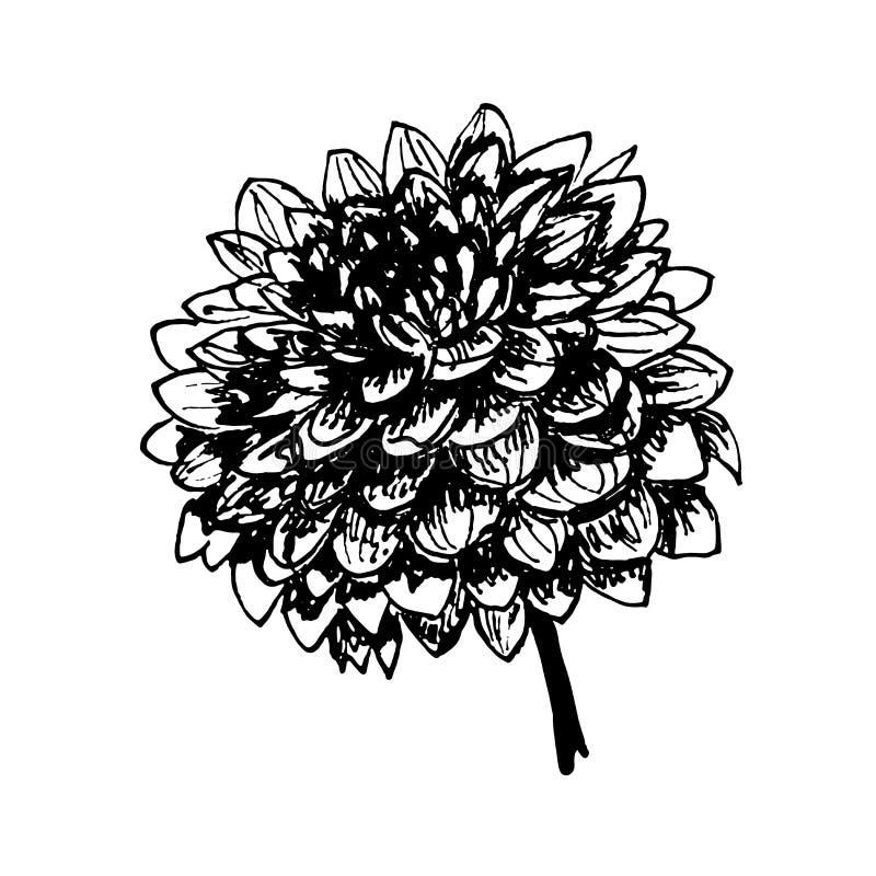 Round luksusowa ręka rysować jesień kwiatu dalii grafika ilustracyjne ilustracja wektor
