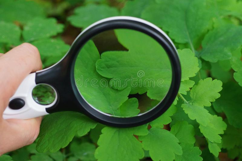 round magnifier over a green leaf of a plant stock photography
