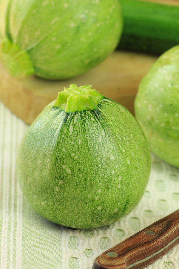 Download Round marrow stock image. Image of uncooked, harvest - 25432017