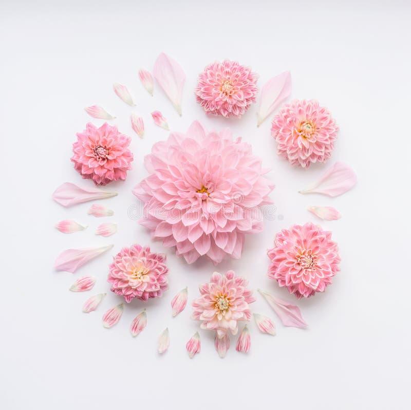 Round menchia pal kwitnie skład z płatkami na białym desktop tle, mieszkanie nieatutowy, odgórny widok Kreatywnie kwiecisty greet fotografia stock