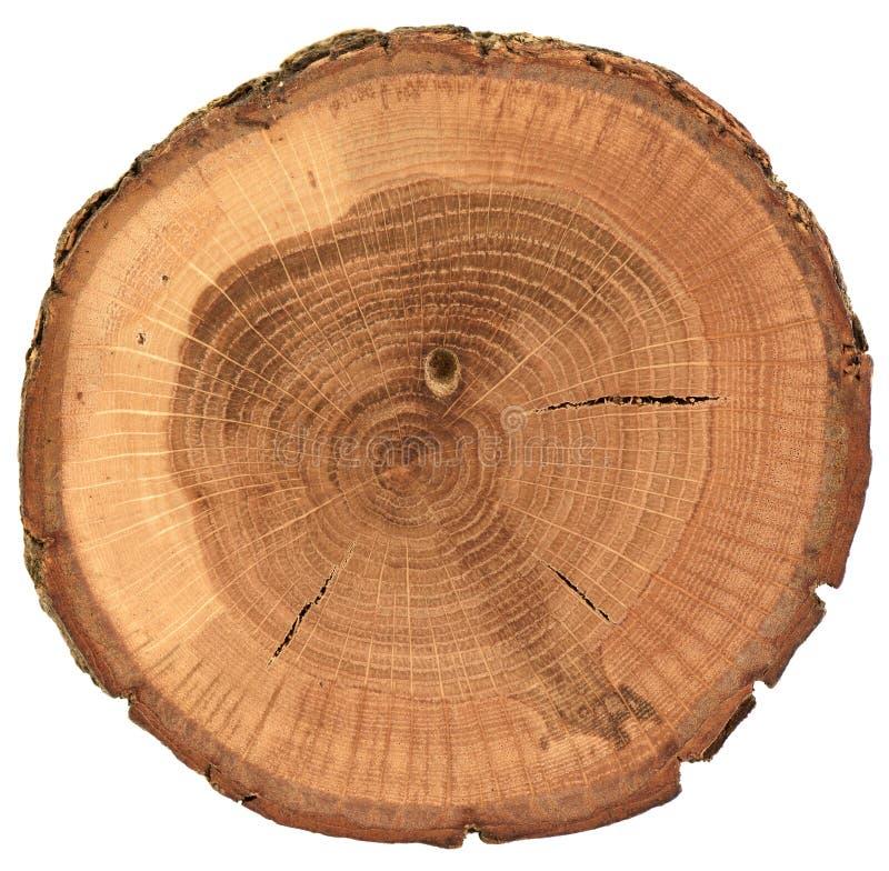 Round oak wood slab with bark, growth rings and cracks isolated on white background stock photo