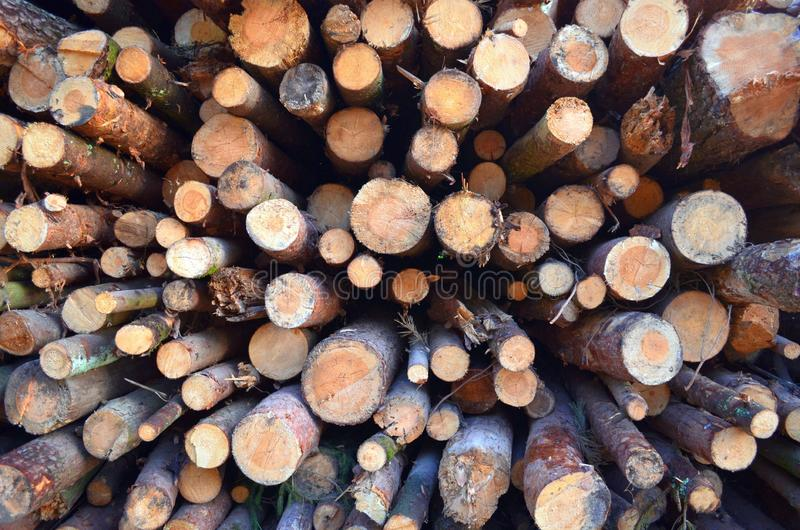 Round pine tree logs lie in the forest piled uphill royalty free stock photo