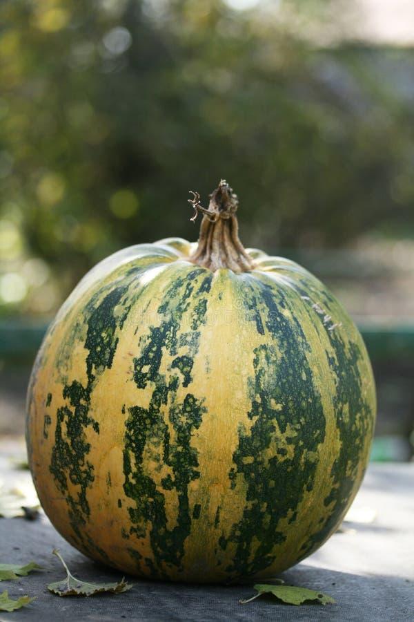 Download Round pumpkin stock image. Image of pumpkin, fall, green - 16537867
