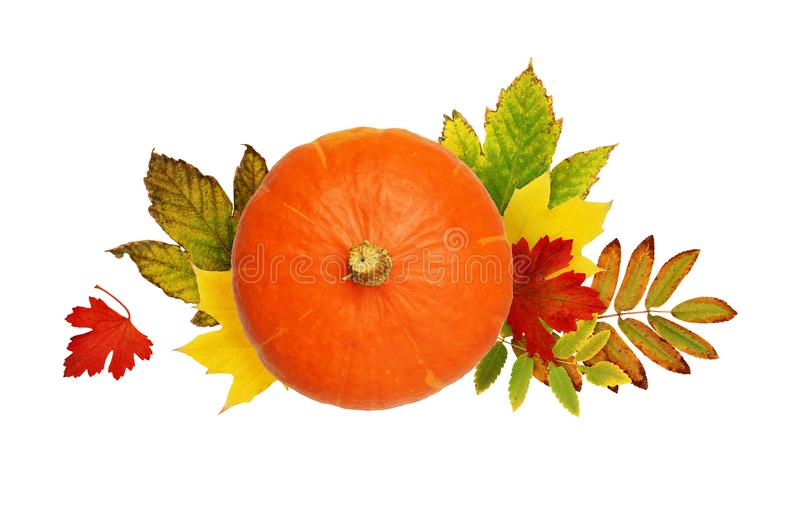 Round pumpkin with autumn colorful leaves royalty free stock image