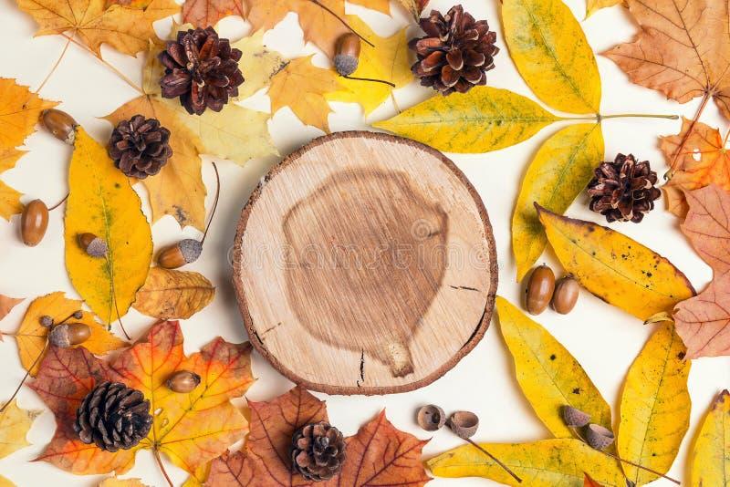 Round rżnięty drzewo z jesień liśćmi, rożkami i acorns na światła bac, zdjęcia royalty free