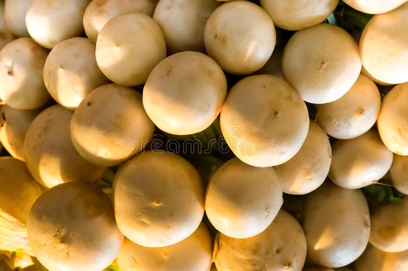 Round radish white vegetable pattern stack of useful products base of salad pickles snacks farmer background royalty free stock photography
