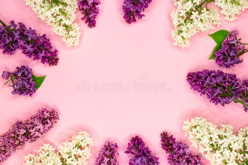 Round rama bez kwitnie, rozgałęzia się, i liście i płatki z przestrzenią dla teksta na różowym tle Mieszkanie nieatutowy, odg?rny obrazy royalty free