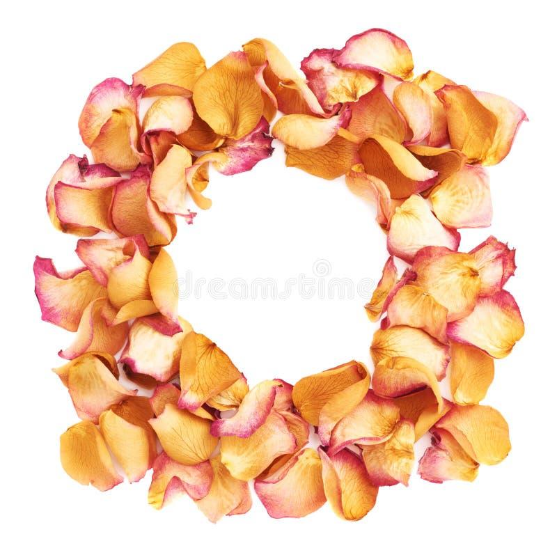 Round rama robić menchii róży płatki jako romantyczny skład nad białym tłem obraz royalty free
