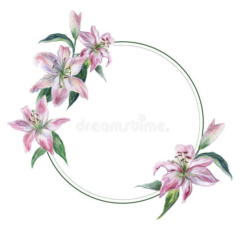 Round rama z bielu i menchii akwareli lilys ilustracja wektor