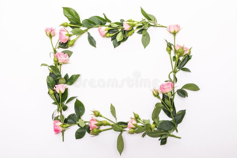 Round rama z menchia kwiatu różami pączkuje, rozgałęzia się, i liście odizolowywający na białym tle Nieatutowy mieszkanie, odgórn zdjęcie royalty free