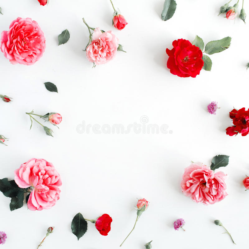 Round ramowy wianku wzór z różami, różowymi kwiatów pączkami, gałąź i liśćmi odizolowywającymi na białym tle, zdjęcie stock