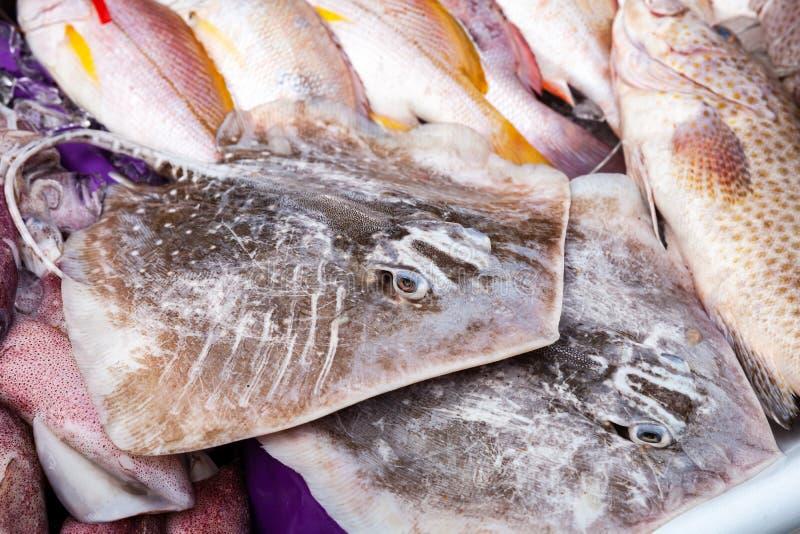 Round ribbontail promienia ryba na kontuarze fotografia royalty free
