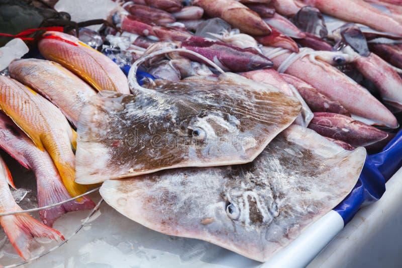 Round ribbontail promienia ryby, Malezja fotografia royalty free
