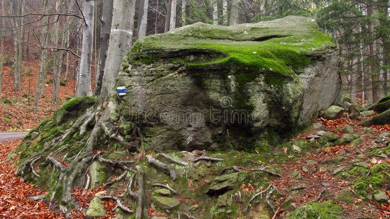 Round rock in the forest stock image