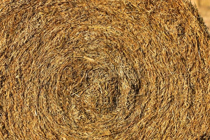 Round siana beli tekstura zdjęcia royalty free
