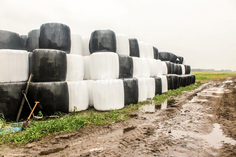 Round silage bales wrapped in a black and white membrane and laid like a pyramid. stock photography