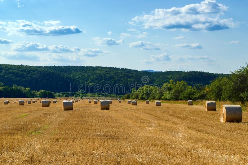 Round straw bales in a field under a blue sky with clouds. royalty free stock photo