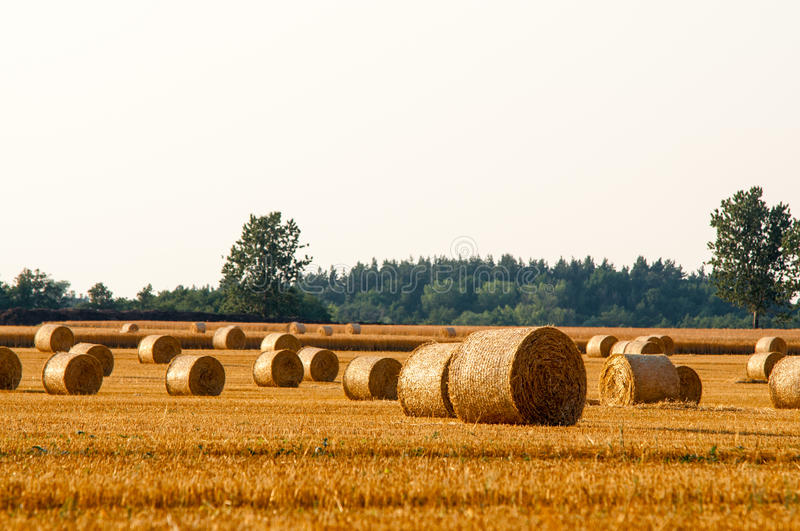 Round straw bales in harvested fields. And sky stock photography