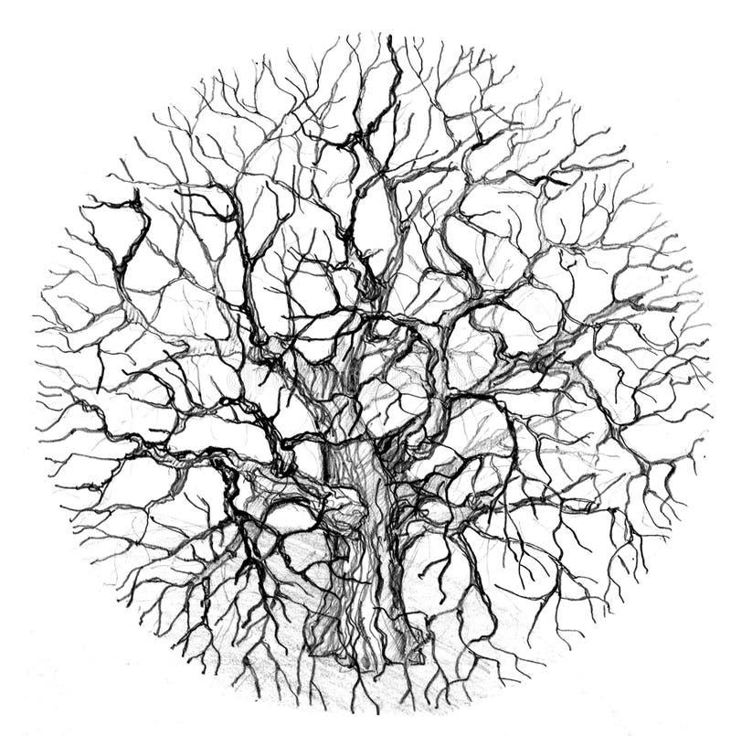 Round Tree Royalty Free Stock Photos