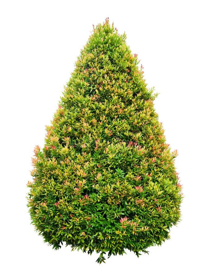 Download Round Tree Stock Photos - Image: 26150933