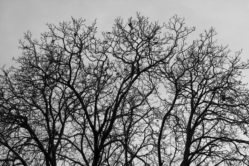 Round walnut tree royalty free stock photography