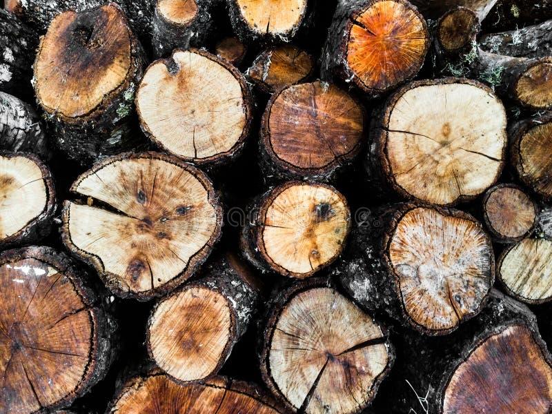 Round tree logs. Brownish round-shaped tree logs royalty free stock image