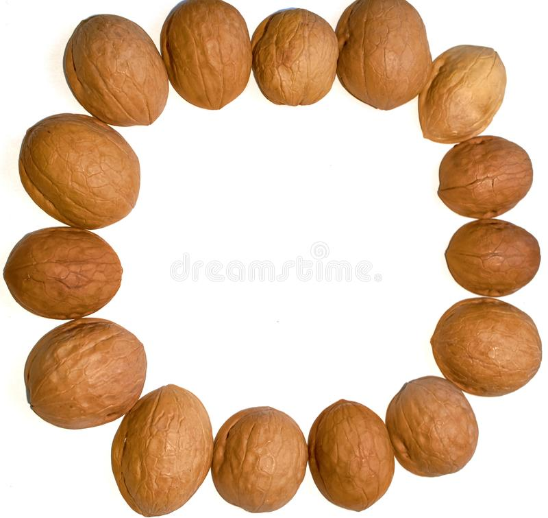 Round walnut shell frame isolated white background royalty free stock photo