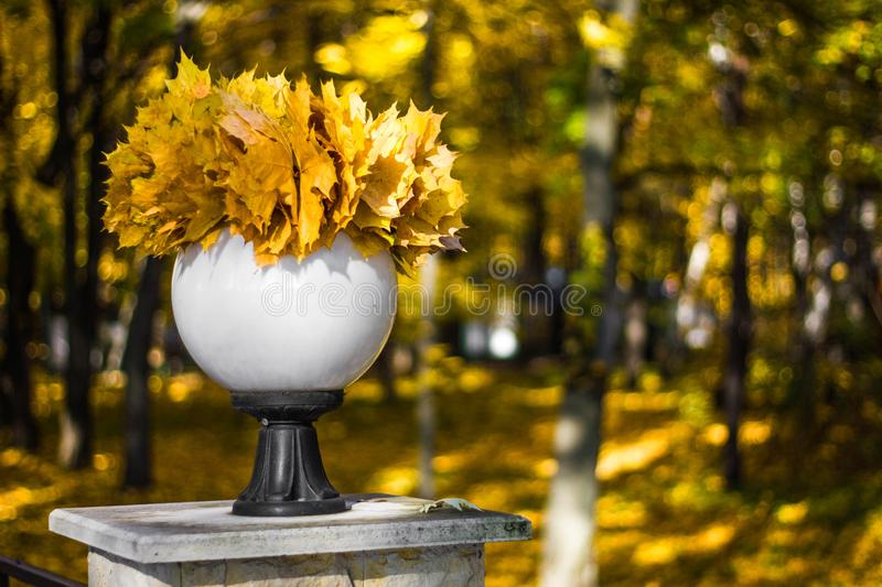 Round white lantern with a bouquet of yellow maple leaves in the autumn Park close-up. Beautiful autumn still life stock photos