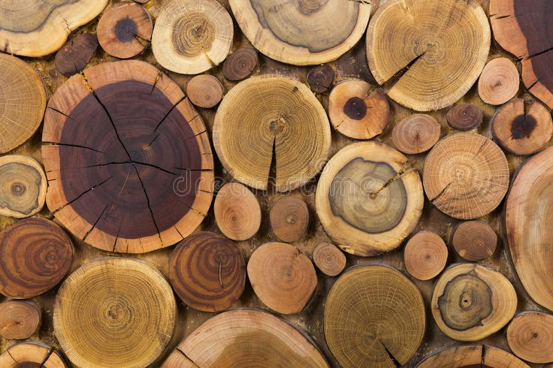 Round wooden unpainted solid natural ecological soft colored brown and yellow stumps background, Tree cut sections different sizes royalty free stock photography