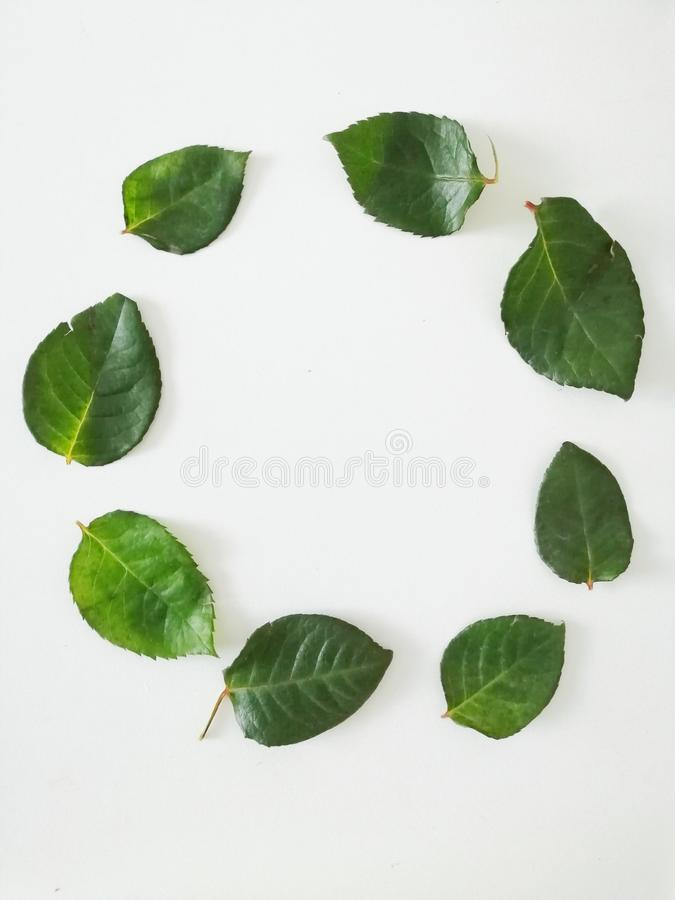 Round wreath of green leaves. Copy for text. Leaves on an isolated white background. Round wreath green leaves copy text isolated white background stock image