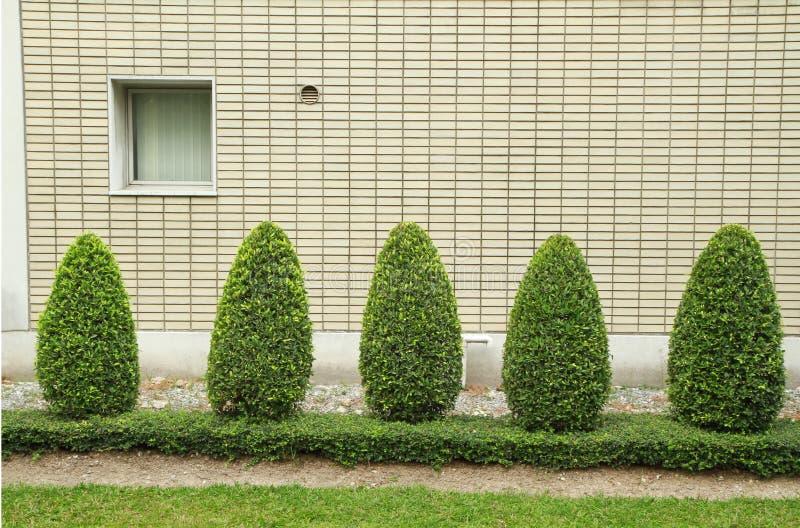 Rounded bush