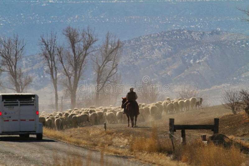 Roundup Near Loma. Sheep roundup near Loma, Colorado stirring up a great deal of dust stock photography