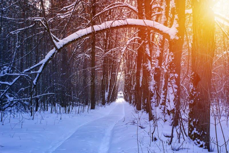 Route à l'arrière-plan ensoleillé de coucher du soleil d'arbres forestiers de neige d'hiver de forêt d'hiver Coucher du soleil ro photos libres de droits