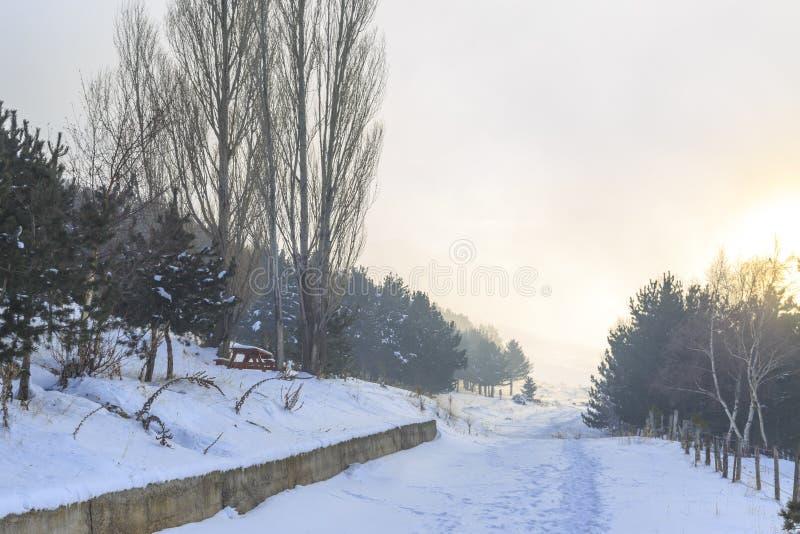 Route à la forêt pendant l'horaire d'hiver avec la brume dans Erzurum, Turquie image libre de droits