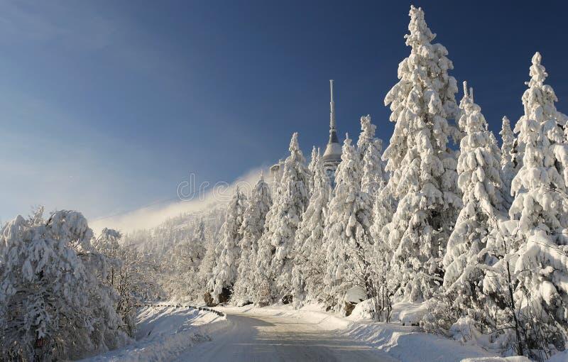 Route à la montagne d'hiver photos libres de droits
