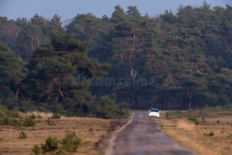 Route à voie unique avec la voiture blanche sur le bord de la route dans la réserve naturelle photographie stock libre de droits