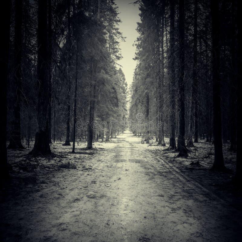 Route étroite par la forêt foncée images stock