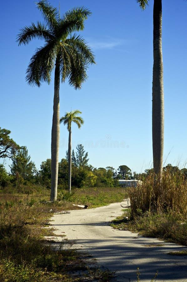 Route abandonnée avec des palmiers image libre de droits