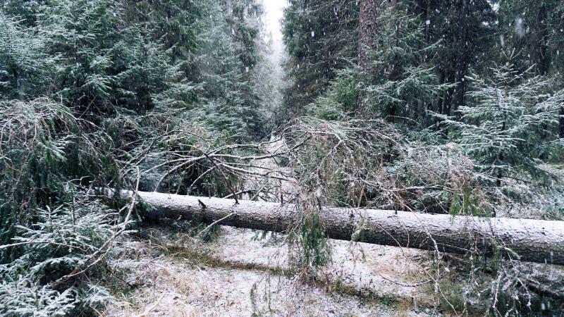 Route abandonnée dans la forêt d'hiver après des ventis images libres de droits