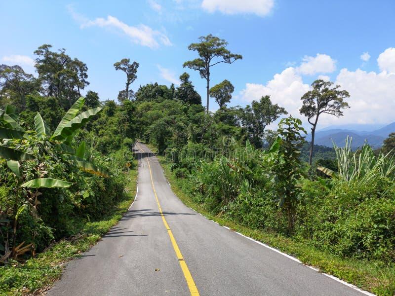 Route abandonnée de montagne entourée par la végétation tropicale, sur le chemin à nulle part photo libre de droits
