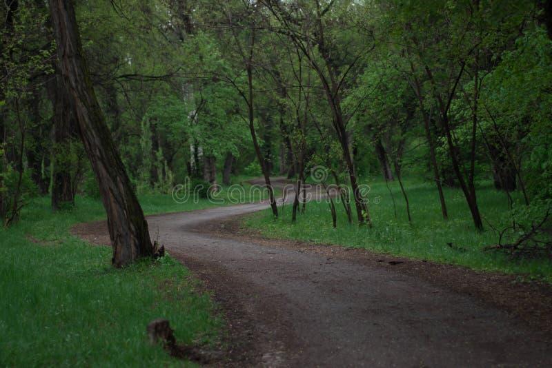 Route au milieu de la forêt par temps pluvieux image libre de droits