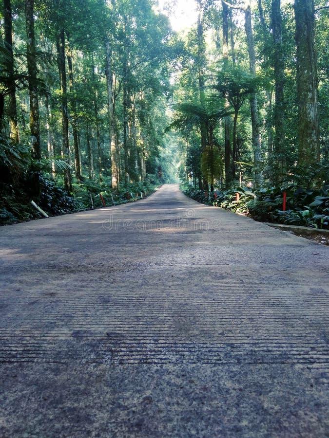 Route au milieu de la for?t photographie stock libre de droits