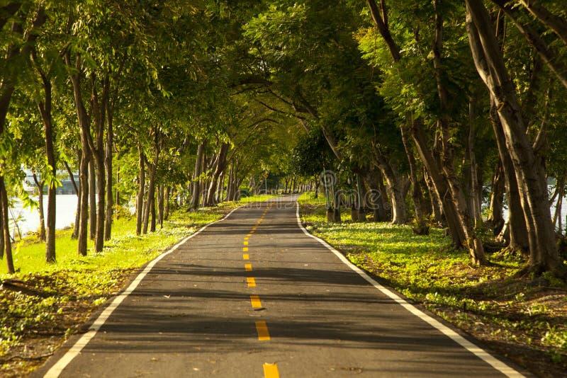 Route avec des arbres des deux côtés photographie stock