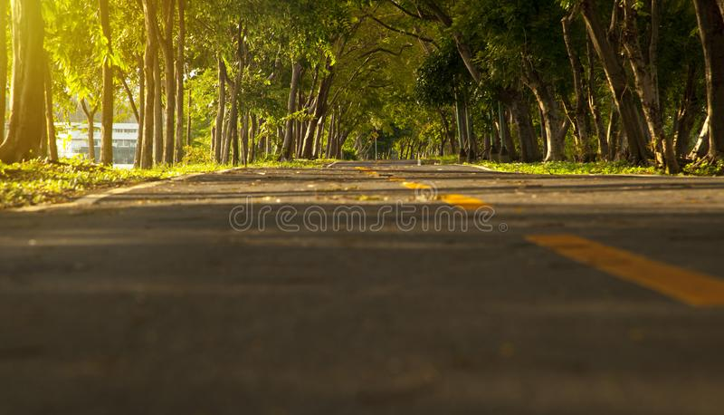 Route avec des arbres des deux côtés images stock
