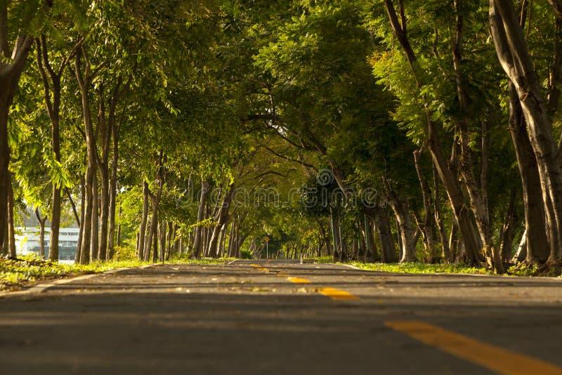 Route avec des arbres des deux côtés photos stock