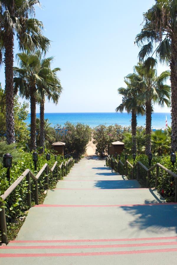 Route avec des palmiers vers la mer Escaliers à la plage images libres de droits
