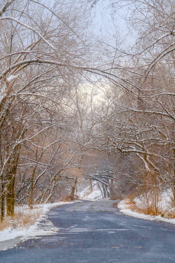 Route avec l'auvent des arbres neigeux à Salt Lake City image libre de droits