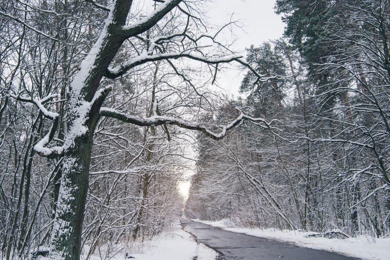 route bétonnée dans beau neigeux image stock