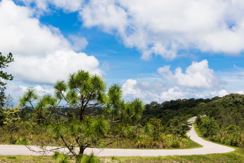 Route bétonnée dans la forêt image libre de droits